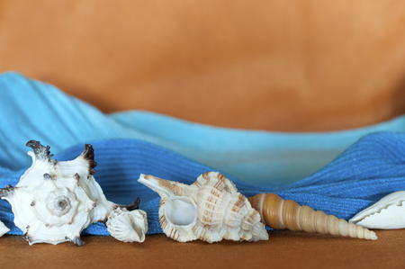 beautiful, different seashells on an orange background