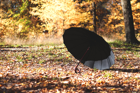 black open umbrella in the autumn park on a sunny day
