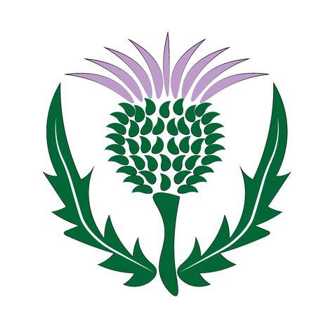 chardon Ecosse symbole et emblème