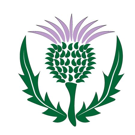 Distel Schottland Symbol und Emblem