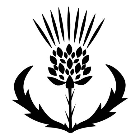 black thistle vector isolated icon