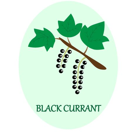 black currant branch with the inscription