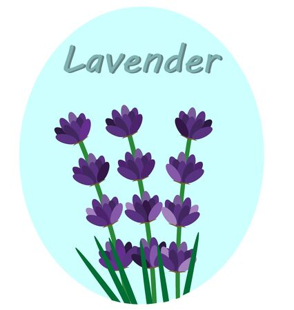 lavender flowers with the inscription Ilustrace