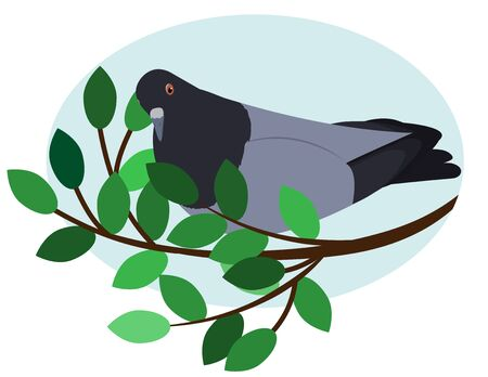 gray dove on a branch