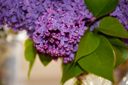 lilac, background, flower,