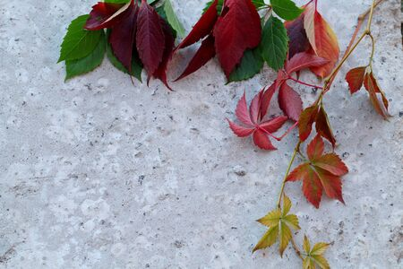 Colorful autumn leaves lie against the background of concrete with a place for text. Top view. Copy space.