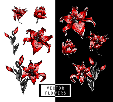 Red lilies hand illustration elements. vector illustration.