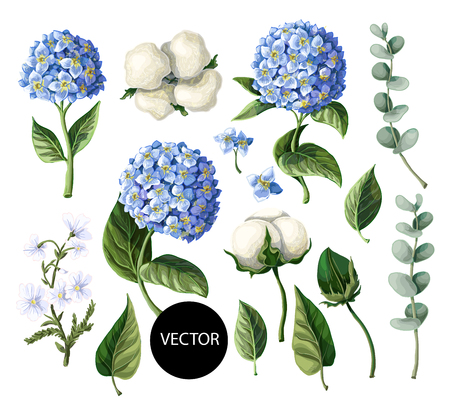 Hydrangea, cotton flowers and eucalyptus branch isolated on white background. Иллюстрация