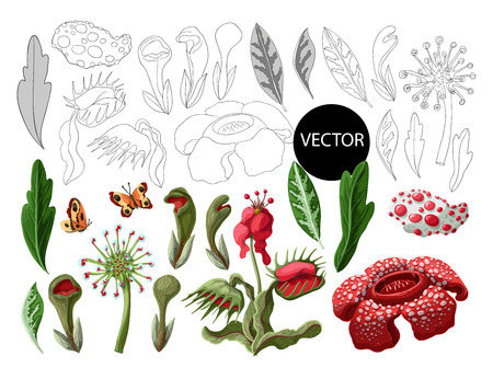 Plant predators such as Venus flycatcher, sundew and others.