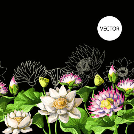 Border with waterlily hand draw.