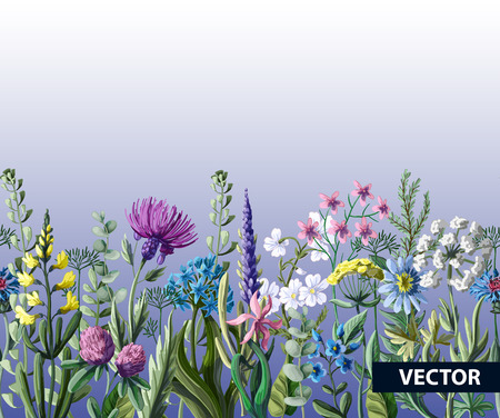 Seamless border of wild flowers. Banque d'images - 104369884