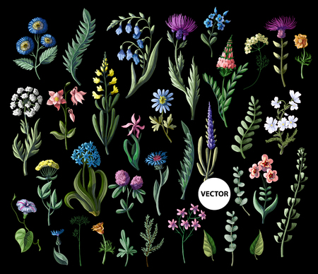 Big set of wild flowers isolated. Vector Banque d'images - 115060909