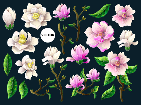 Set of white and pink magnolia flowers.