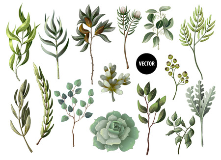 Set of greenery leaves herb and succulent in watercolor style. Eucalyptus, magnolia, fern and other