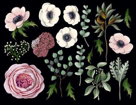 Set with botanical elements such us anemone, English rose, eucalyptus, magnolia leaf and other.