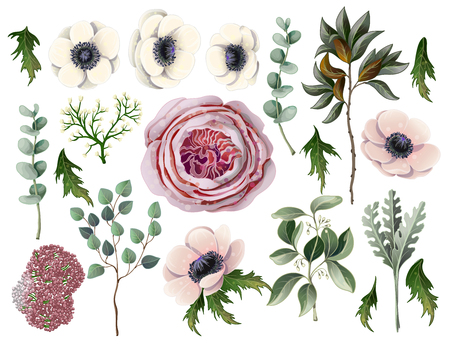 Set with botanical elements such us anemone, English rose, eucalyptus, magnolia leaf and other.