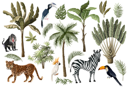 Tropical tree elements such as palm, banana and jungle animals isolated.