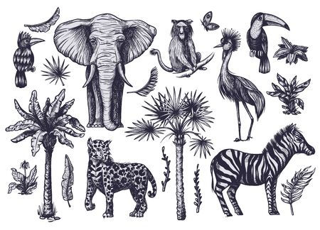 Tropical tree graphic elements such as palm, banana and jungle animals isolated.