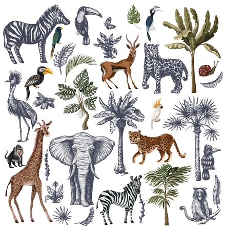 Big set with jungle animals in graphic style isolated. Vector.