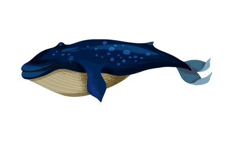 Vector illustration of a big blue whale isolated.