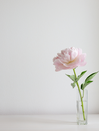 Beautiful pink peony flower in the vase on the white background. Cosy home concept. White room background. Copy space for your text 스톡 콘텐츠