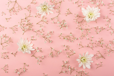 White chrysanthemum and gypsophila pattern on the pink background. Flower concept. Top view, flat-lay.