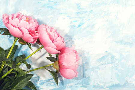 Pink peony flowers on blue background. Greeting with Birthday or holiday concept. Flat-lay, top view. Copy space.