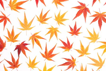 Pattern made from Japanese maple leaves. Hello autumn concept. Flatlay, top view. Copy space for your text.