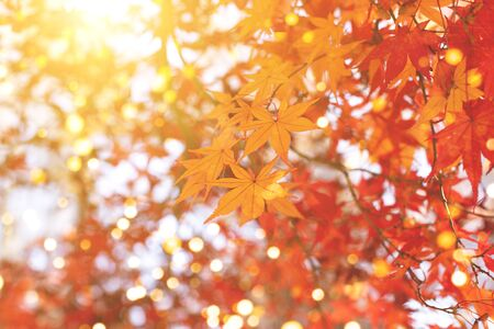 Autumn composition with maple leaves trees and sky. Fall in the  park. Stock fotó - 131782171