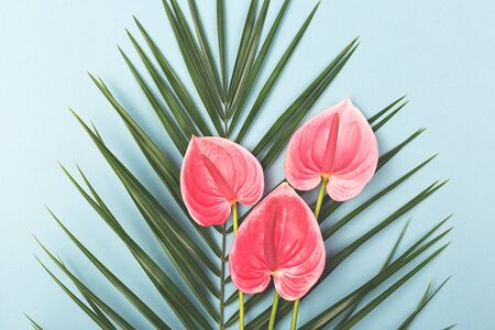 Palm leaf and tropical Anthurium flowers on the blue background. Flat-lay, top view, copy space for your text. Stock fotó - 133455517