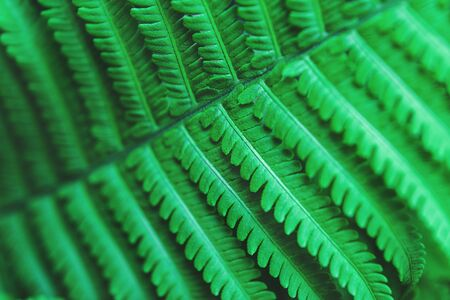 Beautiful fern leaves, perfect nature background for your projects. Stock fotó