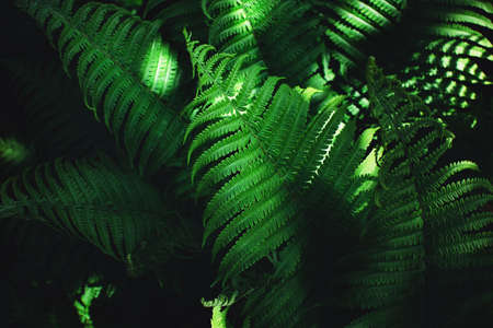 Beautiful fern leaves, perfect nature moody background.