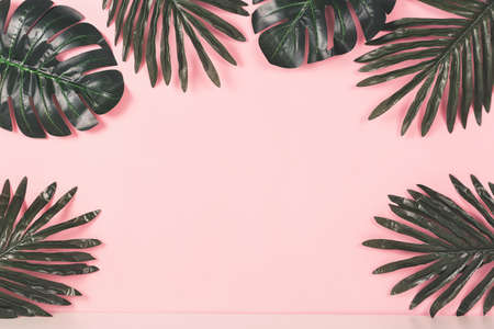 Tropical background concept. Various palm leaves on pink background.