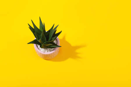 A pink flower pot on vivid yellow background. Stok Fotoğraf