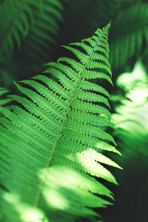 Beautiful fern leaves, perfect moody nature background.