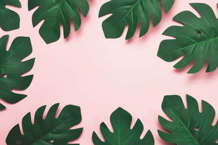 A border made with tropical leaves on pink background. 版權商用圖片