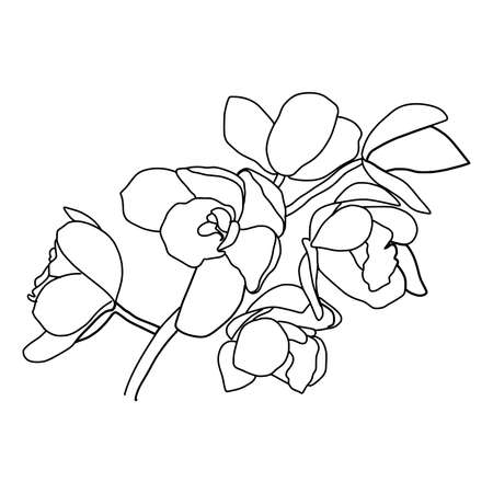 Abstract one line flowers. Botanical contour drawing. Organic shapes backgroud. Modern minimal art illustration. Elegant continuous line poster.