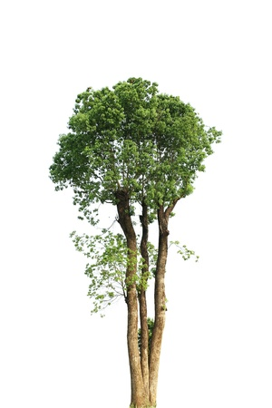 Camphor, white background, very good material. photo