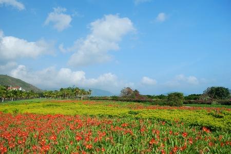 Was taken in Sanya, Hainan seaside scenery Stock Photo - 10642678