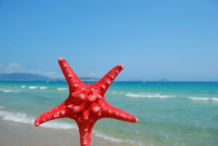 Starfish on the beach of sand and sea background photo