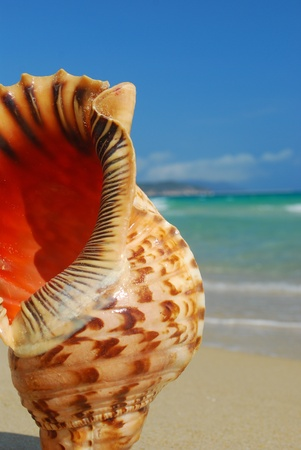 Conch on the beach of sand and sea background photo