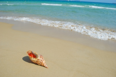 A conch shell on an exotic beach with the sea in the background photo
