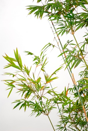 Bamboo isolated on a white background 版權商用圖片 - 11289653