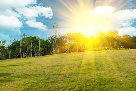 Bright sunset over green field Stock Photo - 11393183