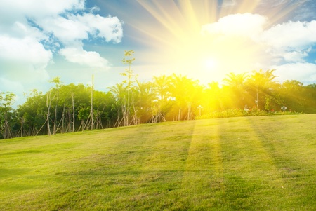 Bright sunset over green field Stock Photo - 11392965