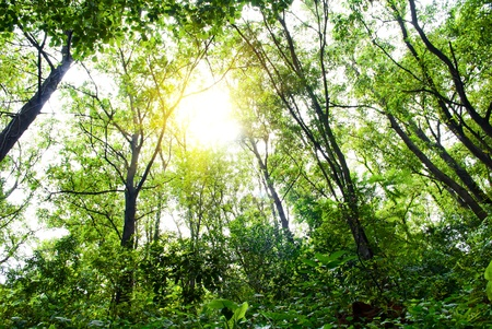 nature. pathway in the forest with sunlight Stock Photo - 11393742