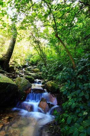 Cascade falls over mossy rocks photo