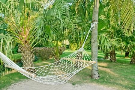 and sanya: Caribbean beach hammock and palm trees in sanya,china