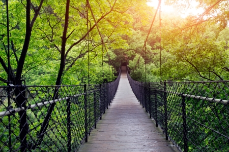 Bridge to the jungle,guilin,china Stock Photo