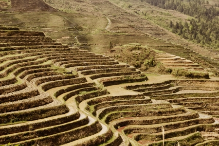 Longji rice terraces (Guangxi province, China) photo